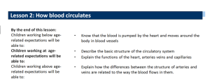 How Blood Circulates